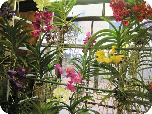 Primavera alla landriana e orchidee a monte porzio catone il sito di roberta cucito - Orchidee da esterno ...