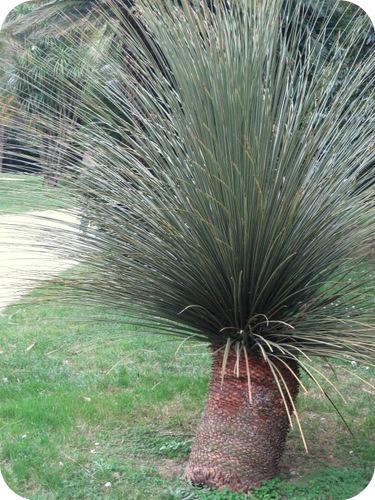 Reggia di caserta il giardino inglese il sito di - Palme nane da giardino ...